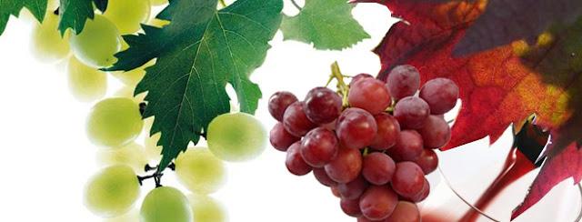 Soñar con uvas ¿Que significa?