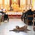 Ο σκύλος που προσευχήθηκε για τα άρρωστα παιδιά...