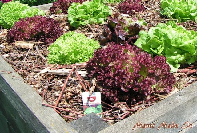 Organic Food - Bio Lebensmittel