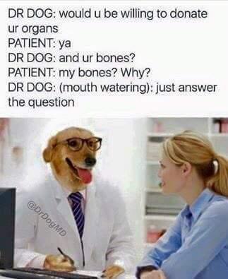 Doctor Dog