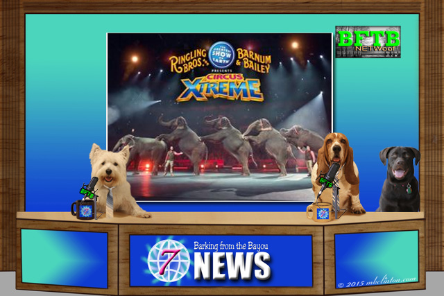 BFTB NETWoof News story on circus elephants retiring