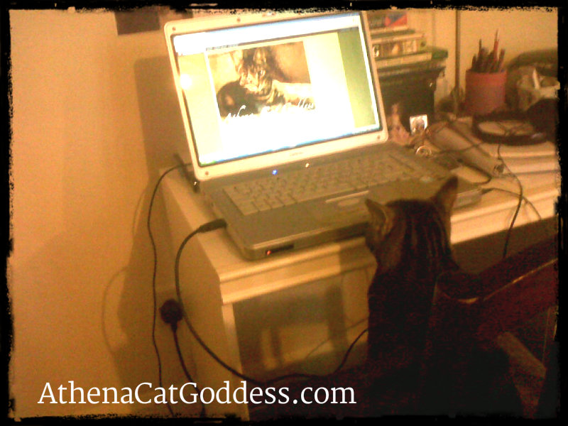 blogging cat