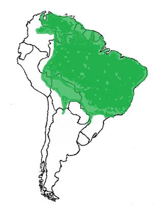 Coendou prehensilis map