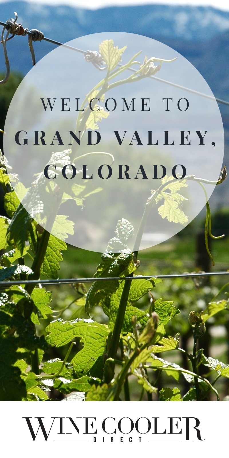 grand valley, colorado, wine