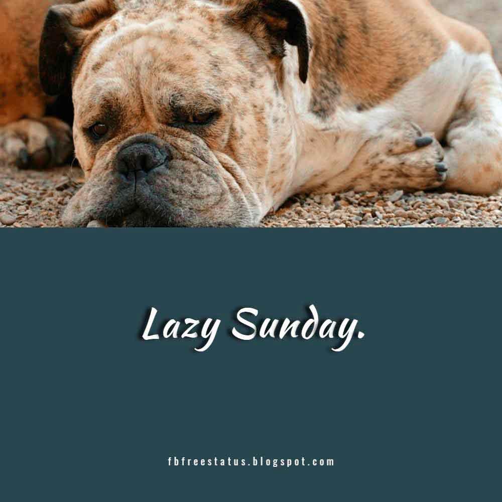 Lazy Sunday.