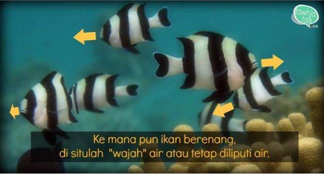 Ke mana pun ikan berhadap, di situ wajah air
