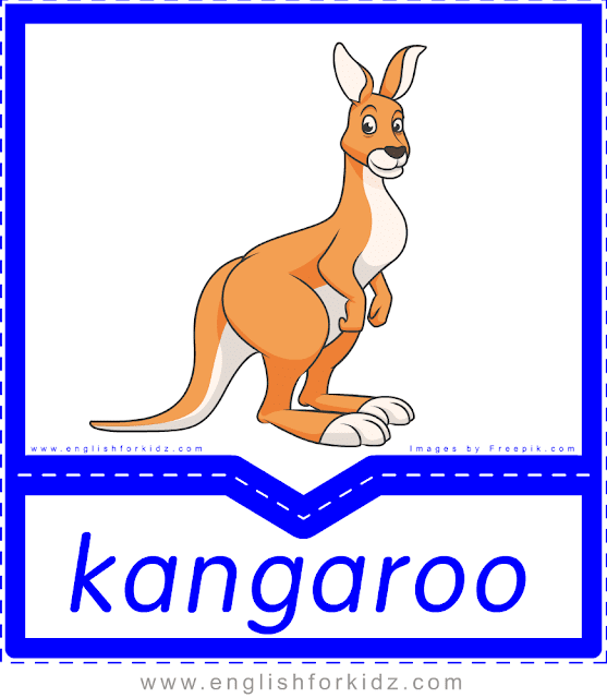 Kangaroo - printable Australian animals flashcards for English learners