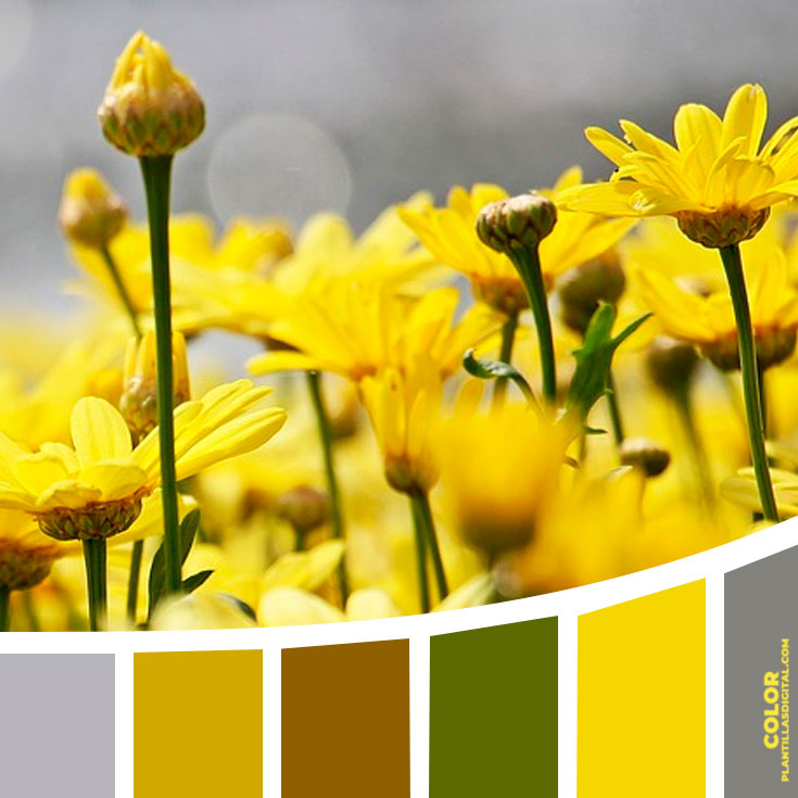 color_111