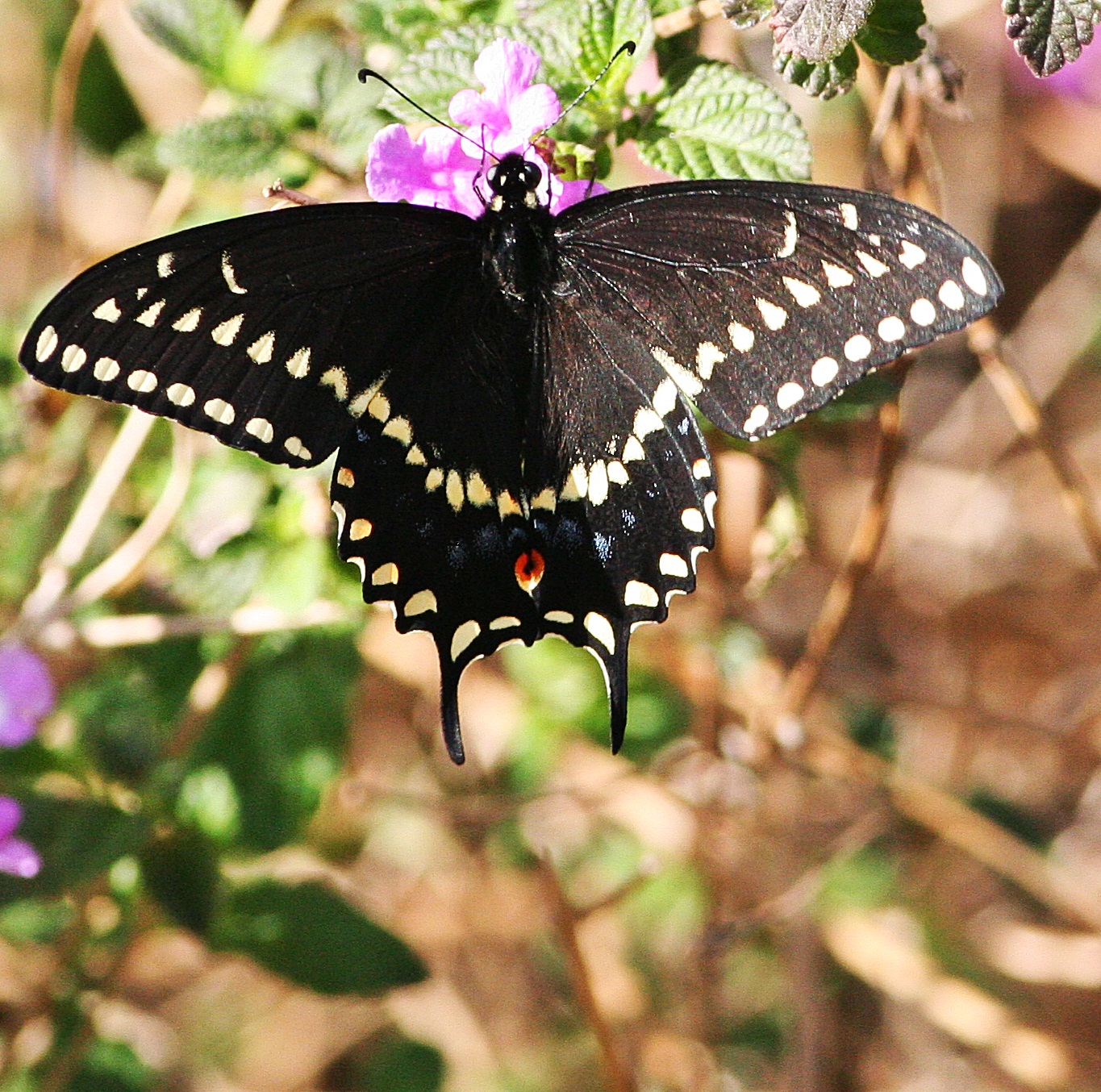 The Nature Of Things Throwback Thursday Butterflies