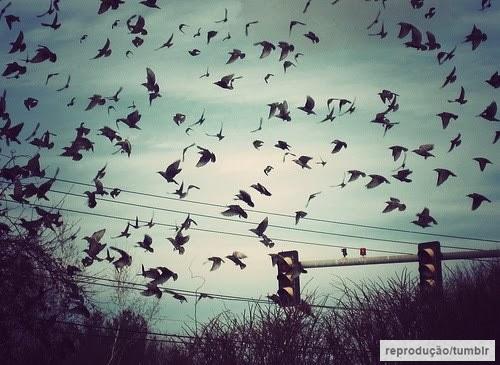 quase perfeito, pássaros voando tumblr