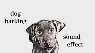 animal dog sounds
