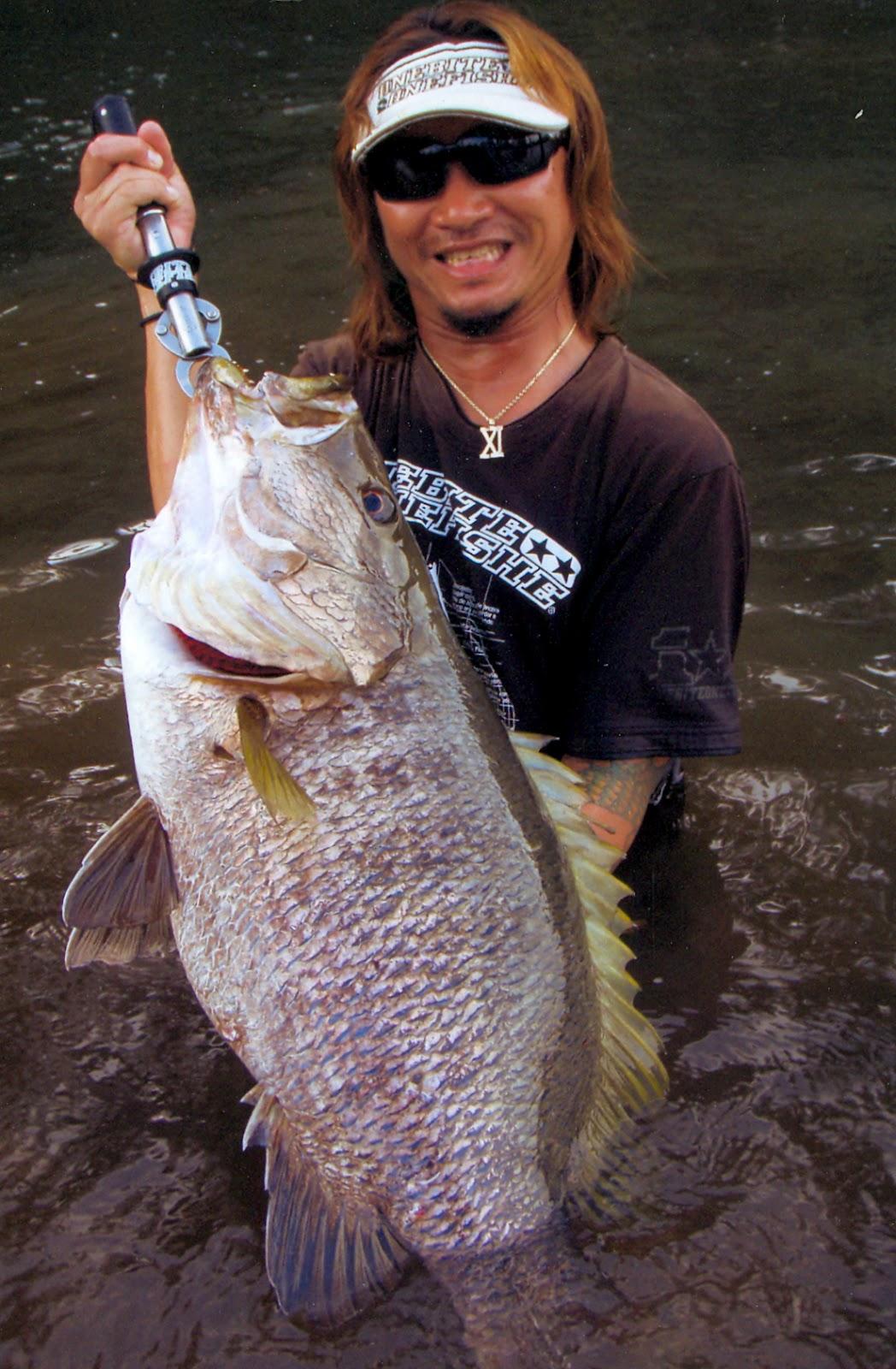 big fishes of the world snapper papuan black lutjanus