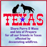 Purrs for Texas