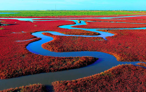 Red beach - Panjin - China