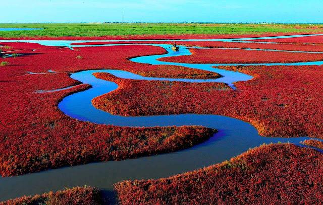 Red beach - Panjin - China