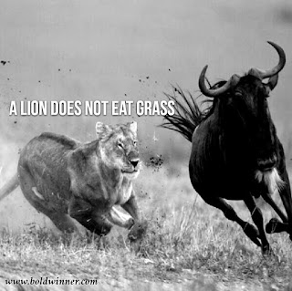 A lion does not eat grass waver objective vision