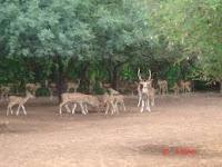 Jawahar Deer Park