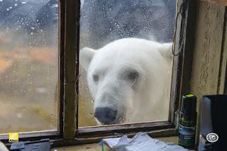 Pulau Wrangel: Pulau Beruang Kutub Dan Mammoth Berbulu