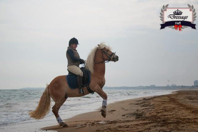 [Guest Blog] Top Vacation Destinations for Horseback Riding
