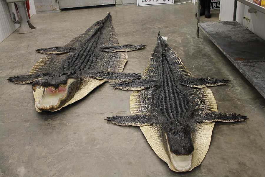 Alligator Rugs