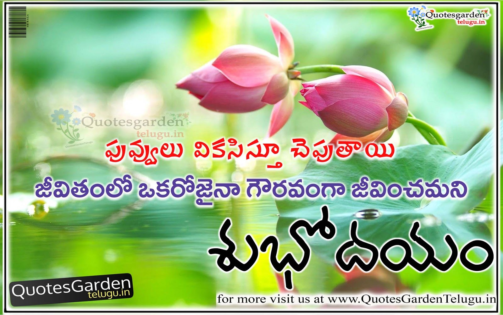 Quotes Garden Fair Best Good Morning Quotes In Telugu  Quotes Garden Telugu  Telugu