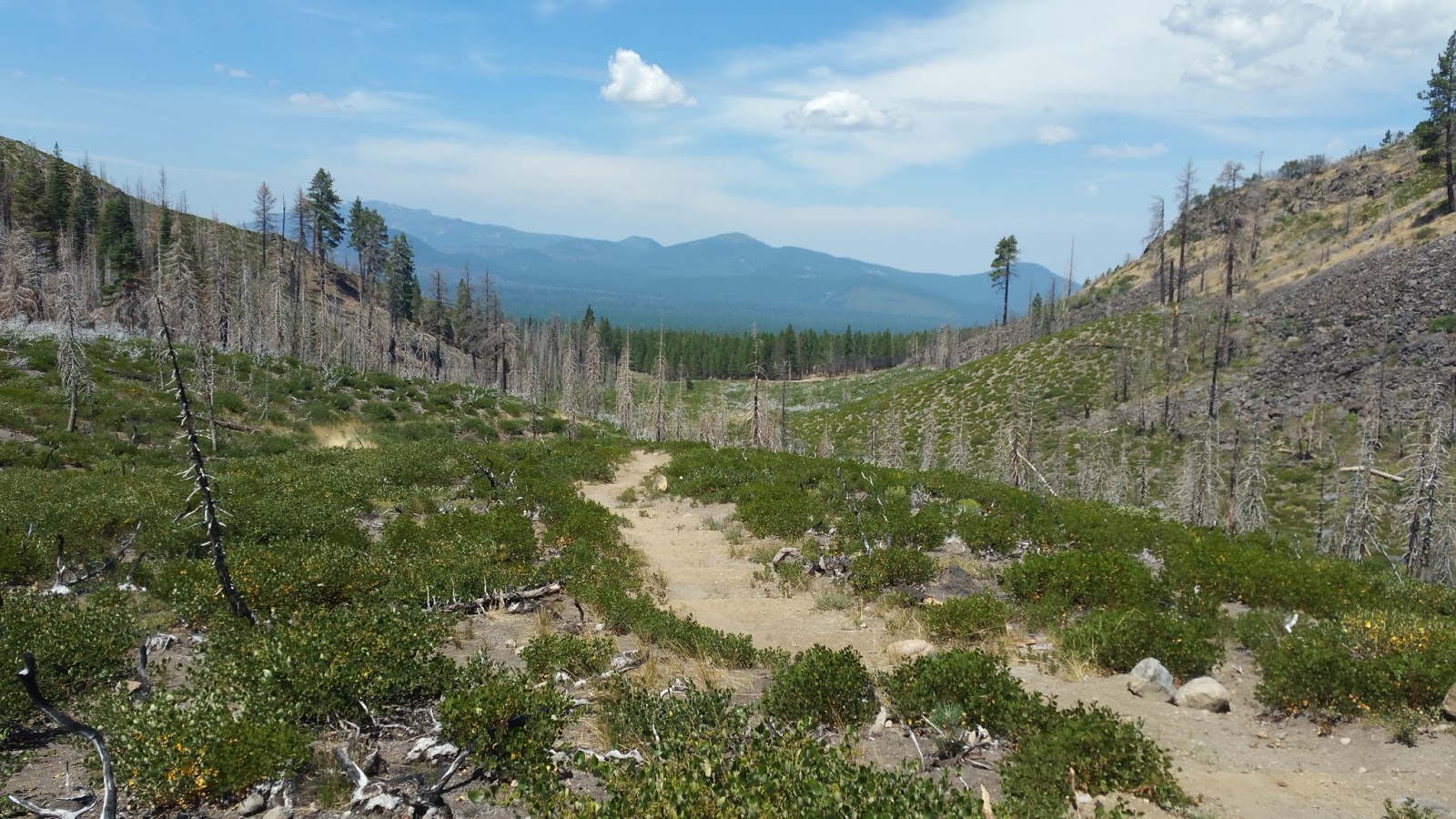 Image: Trees asunder Pacific Crest Trail Blog