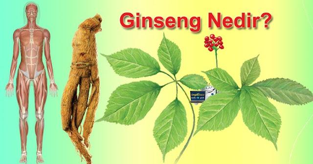 Ginseng Nedir? Ginseng'in Faydaları, Ginseng Nasıl Kullanılır?