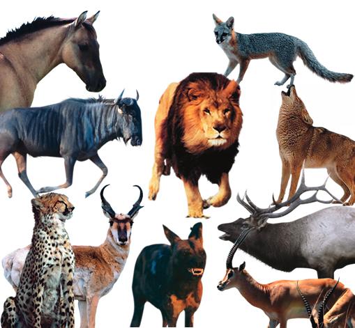 Los 10 animales más veloces del mundo
