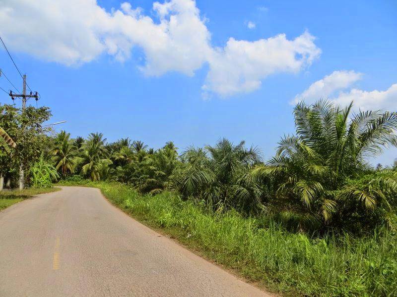 Яркая фотография пальм