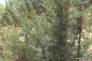 Paisajismo vivaces y gram neas en valdebebas paisaje libre for Ciudad jardin valdebebas