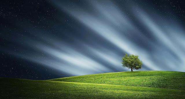 Alone Tress Wallpapers