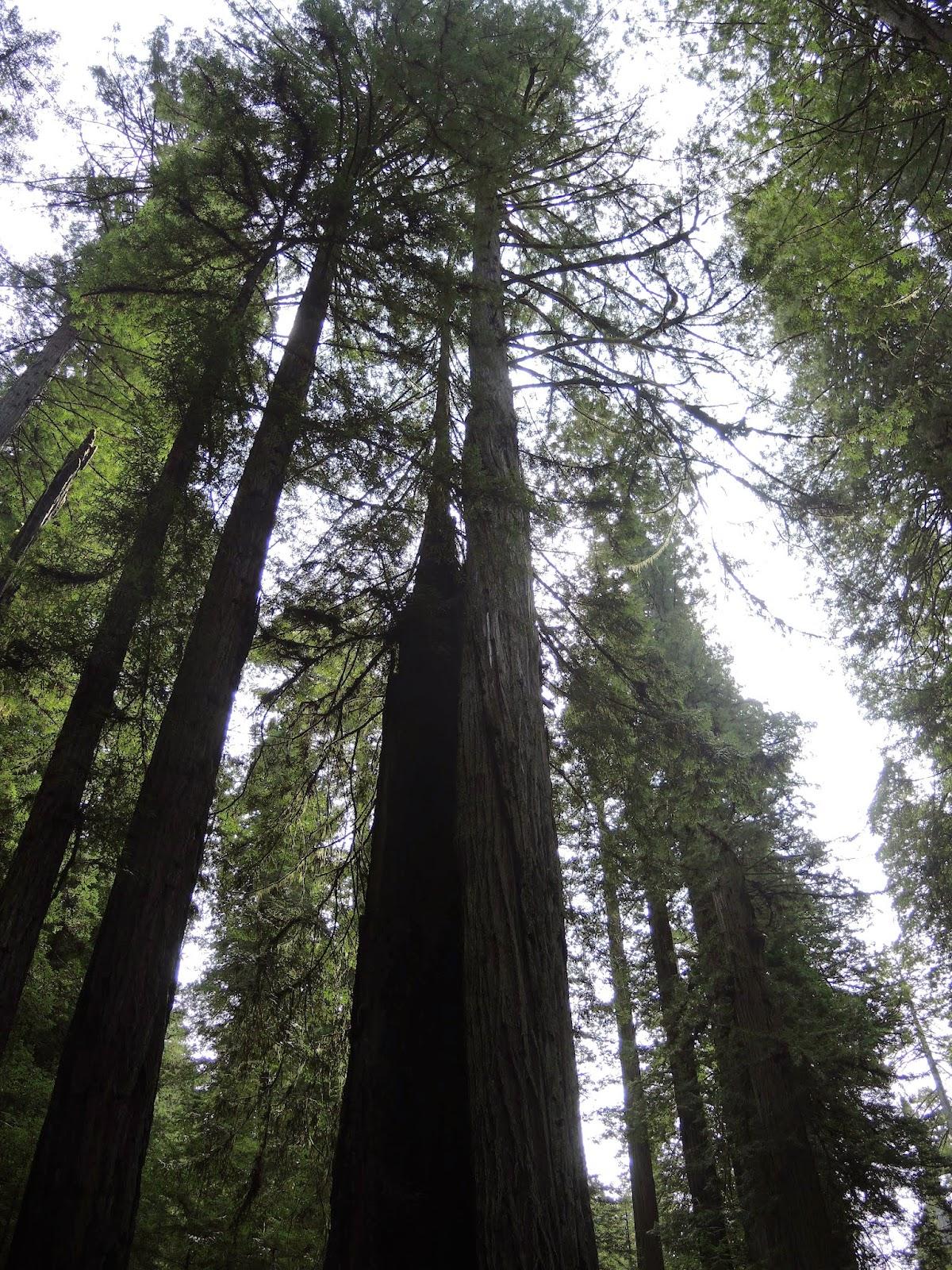 Redwood national park 4