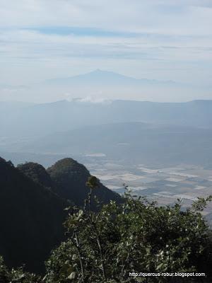 Cerro Viejo - Nevado de Colima al fondo