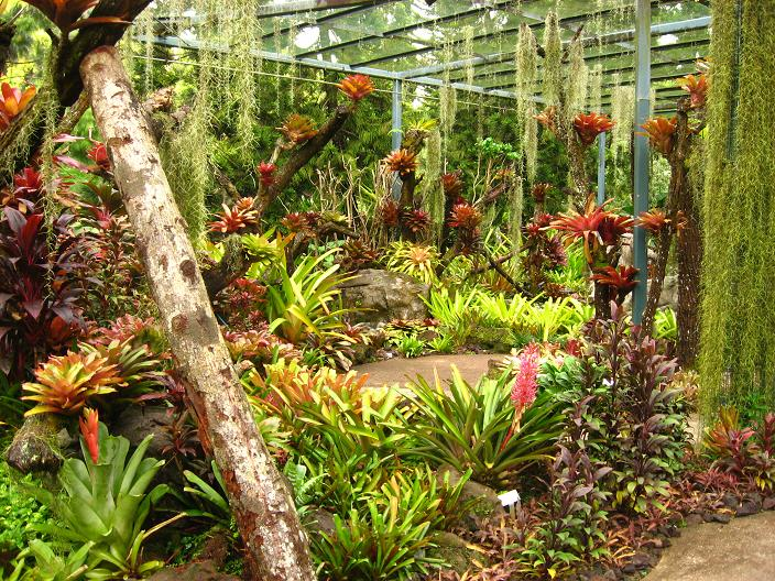 Gardening south florida style bromeliads in the garden for Jungle garden design ideas