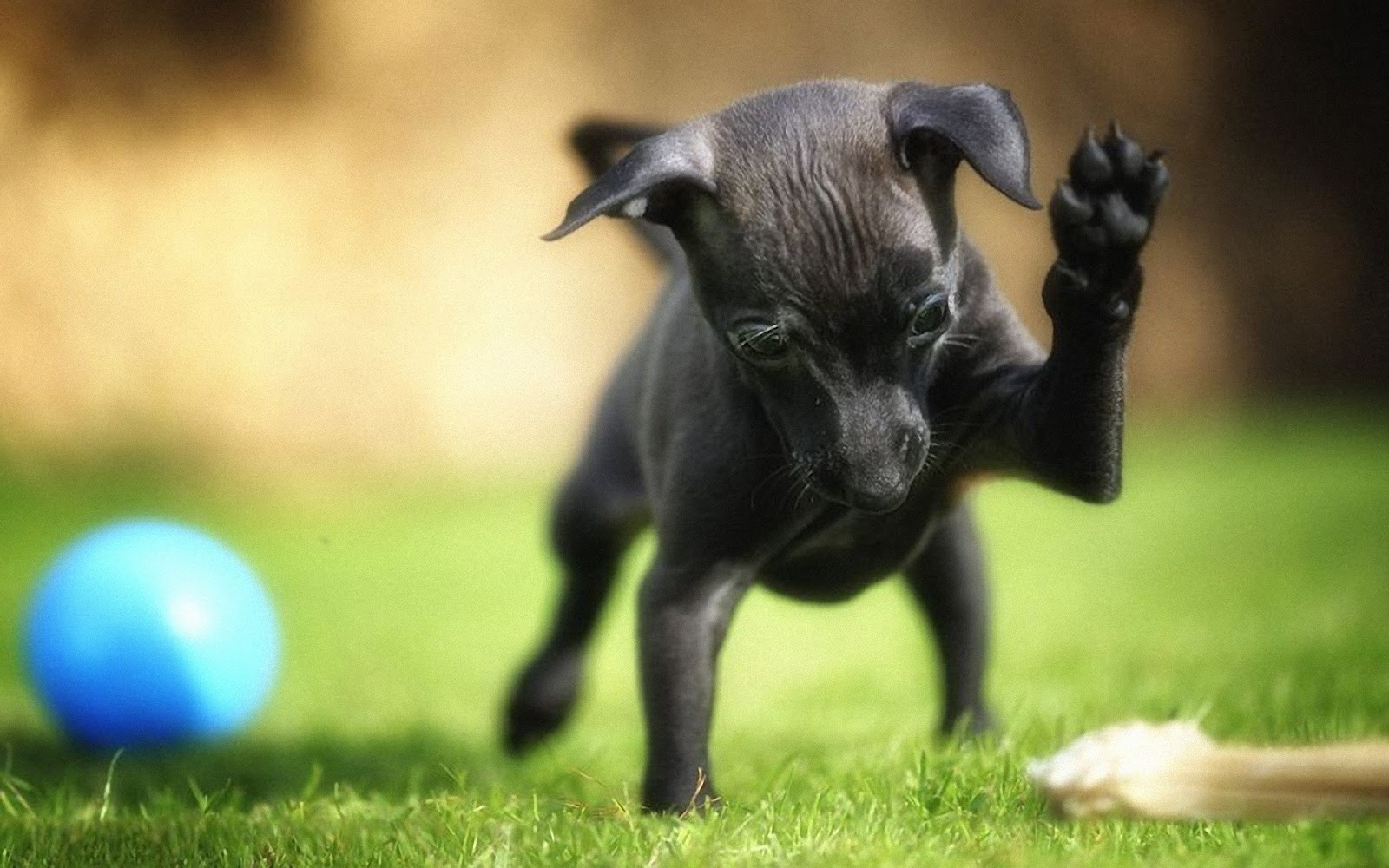 New Dog Wallpapers Entertainment Only