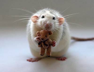 Ratón con peluche
