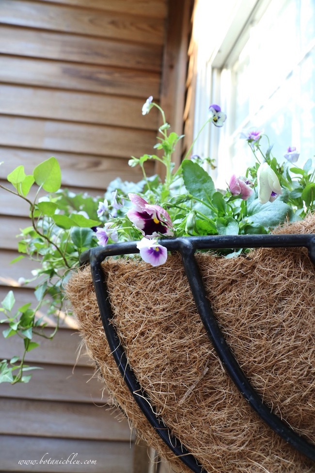 French inspired fall window hay rack basket with ivy