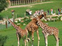 Lisieux zoo