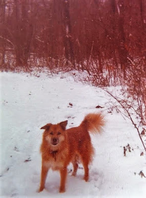 My first dog Ginny.  I was 7 when we adopted her and in my 20's when she passed away.  My Heart Dog, Ginny