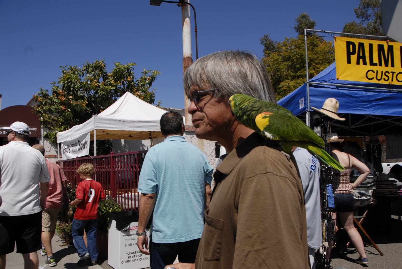 Green parrot at the Avocado Festival