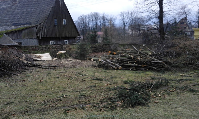 zielona metamorfoza, projekty ogrodów Wrocław