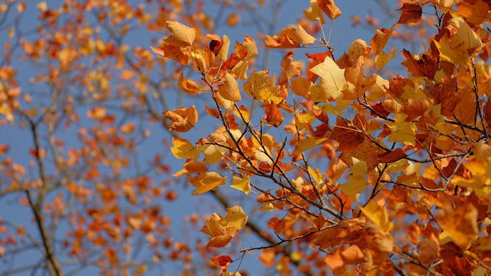 Wallpaper: Last Days of Fall