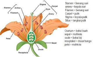 bunga lengkap,bunga lengkap dan tidak lengkap beserta contohnya,yang dimaksud bunga lengkap,perbedaan bunga sempurna dan bunga lengkap,bunga sempurna dan tidak sempurna beserta contohnya,