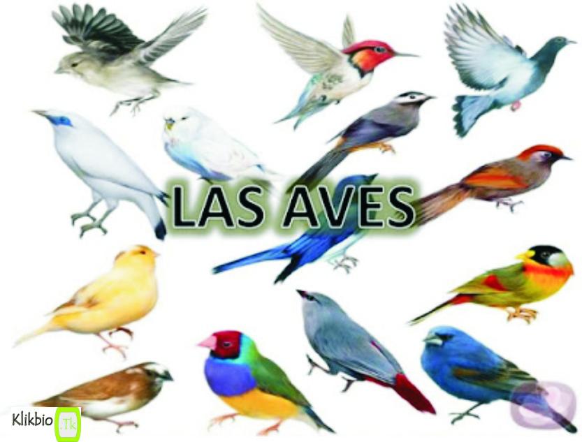 Aves Definition Characteristics Classification | Domain Biologi