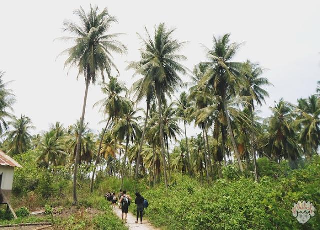 Pohon Kelapa Pulau Sangiang journeyofalek.com