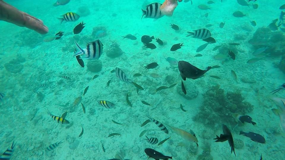 Shimizu Island underwater 2 of 3