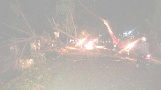 Pohon Besar Tiba-Tiba Tumbang,Di Jln. Bina Karya Benteng