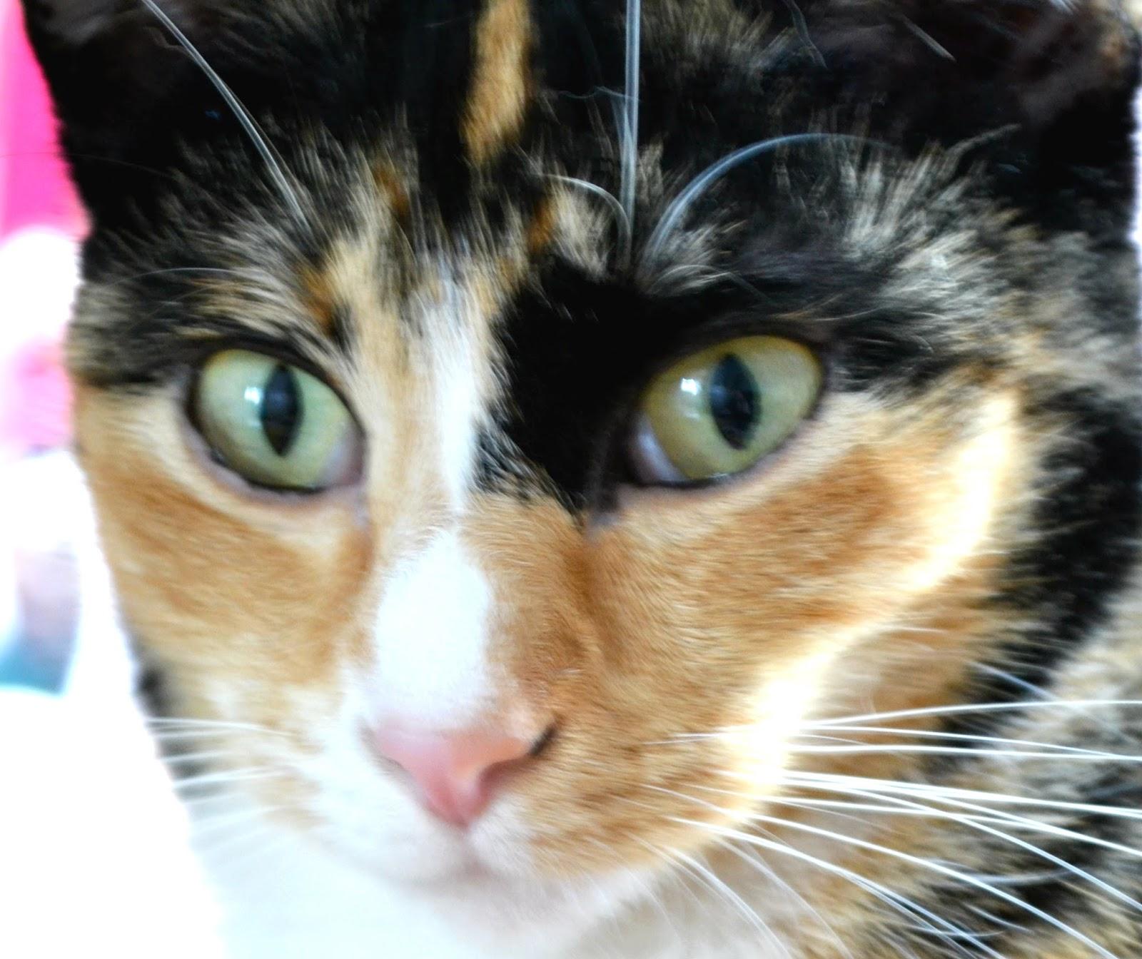 Cat Showing Whites Of Eyes