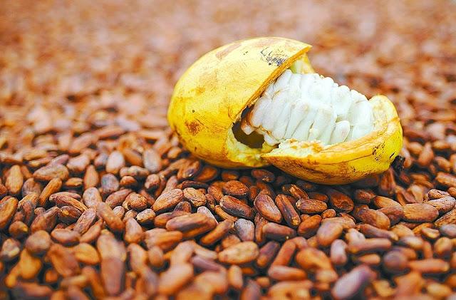 O cacau foi a única produção de fruta que diminuiu. Mesmo assim, a Bahia segue na liderança nacional (Foto: Arquivo Correio)