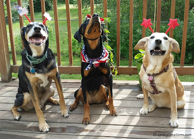 Three happy rescue dogs